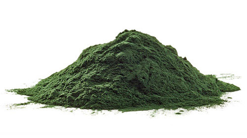 Chlorella-Powder